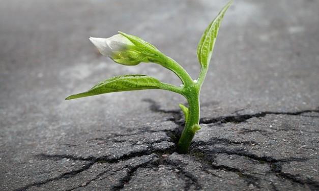 Regeneration: God Makes Us New