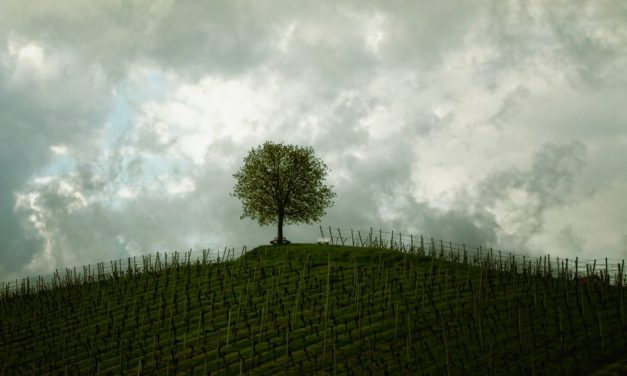 Building Your Tree for a Discipleship Culture